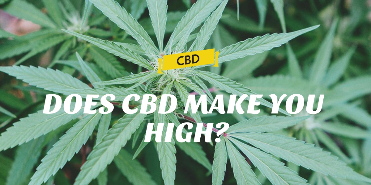 DOES CBD MAKE YOU HIGH?